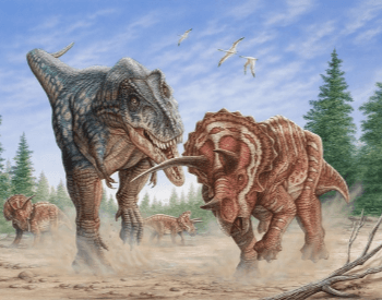 Triceratops Fighting A T Rex