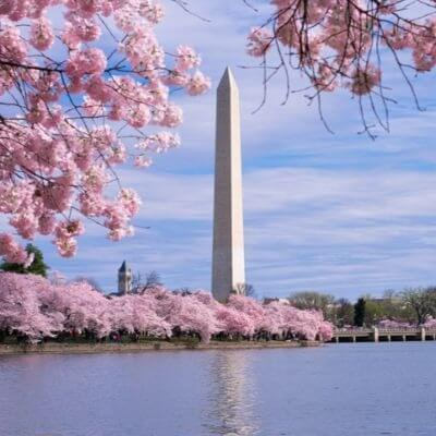 A Picture of the Washington Monument