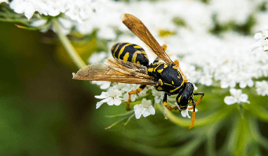 Wasp Facts for Kids