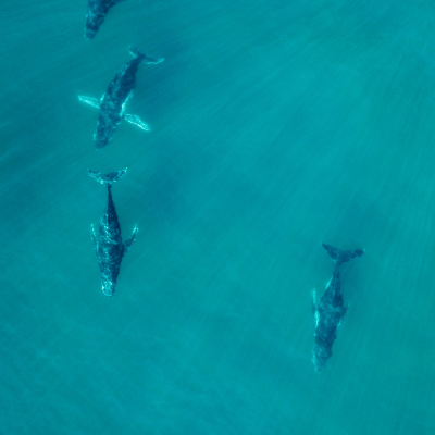 A Picture of Whales